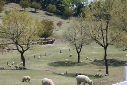 2009年4月29日グリーン牧場