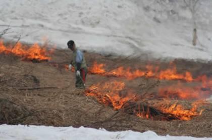 2006年5月6日野焼き画像