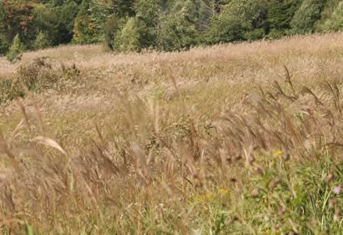 秋の上の原