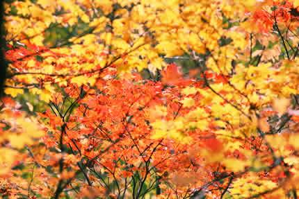 川上川近辺紅葉