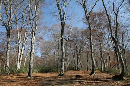秋・水源の森