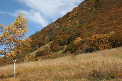 上の原茅草原