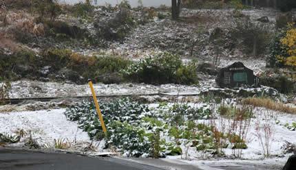 2009年初雪